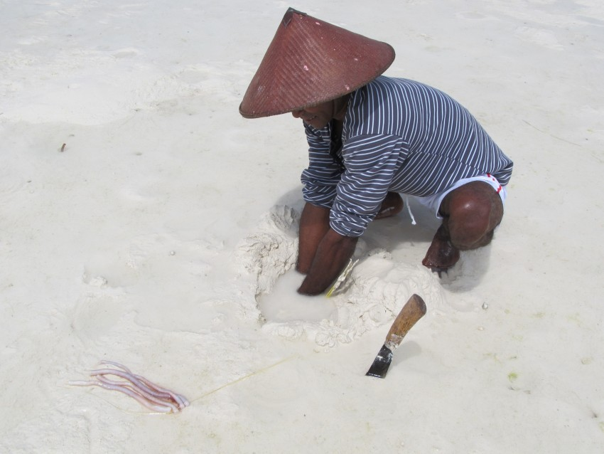 Man collecting sea worms